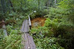 Paysage estonien en été. Source : http://data.abuledu.org/URI/5504b305-paysage-estonien-en-ete