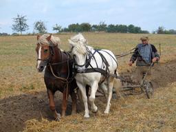 Paysan labourant avec une charrue tractée par deux chevaux. Source : http://data.abuledu.org/URI/503a2120-paysan-labourant-avec-une-charrue-tractee-par-deux-chevaux