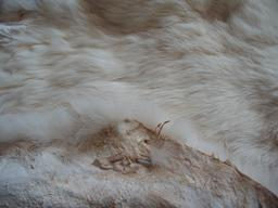 Peau de lapin. Source : http://data.abuledu.org/URI/535a5a03-peau-de-lapin