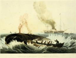 Pêche à la Baleine. Source : http://data.abuledu.org/URI/51bee9fd-peche-a-la-baleine