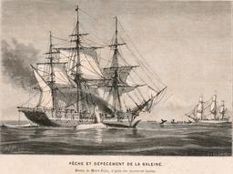 Pêche à la baleine en 1866. Source : http://data.abuledu.org/URI/59459a94-peche-a-la-baleine-en-1866