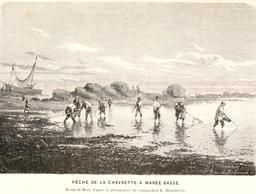 Pêche à la chevrette à marée basse en 1866. Source : http://data.abuledu.org/URI/5945400a-peche-a-la-chevrette-a-maree-basse-en-1866
