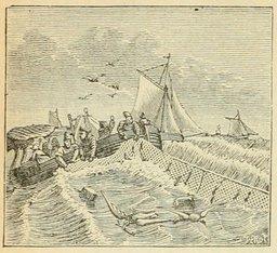 Pêche au hareng au XIXème siècle. Source : http://data.abuledu.org/URI/524ef4a5-peche-au-hareng-au-xixeme-siecle