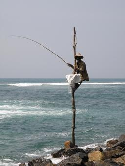 Pêcheur sur échasse. Source : http://data.abuledu.org/URI/501998f4-pecheur-sur-echasse