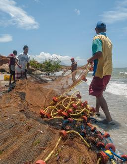 Pêcheurs au filet en bord de mer. Source : http://data.abuledu.org/URI/52cf26f8-pecheurs-au-filet-en-bord-de-mer