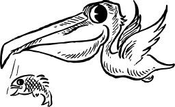 Pélican laissant tomber un poisson. Source : http://data.abuledu.org/URI/47f616bf-pelican-laissant-tomber-un-poisson