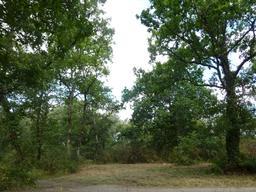 Petit airial dans le parc du Bourgailh. Source : http://data.abuledu.org/URI/5826cb5f-petit-airial-dans-le-parc-du-bourgailh