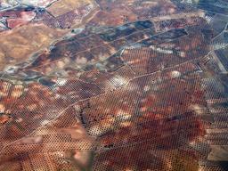 Photo aérienne d'une oliveraie espagnole. Source : http://data.abuledu.org/URI/505a3fc9-photo-aerienne-d-une-oliveraie-espagnole