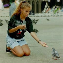 Pigeons de ville. Source : http://data.abuledu.org/URI/50fd38b6-pigeons-de-ville