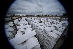 Piles de tuiles chaulées au port de Gujan-Mestras. Source : http://data.abuledu.org/URI/55a91cce-piles-de-tuiles-chaulees-au-port-de-gujan-mestras