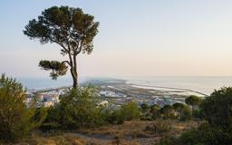 Pin d'Alep à Sète sur le Mont Saint-Clair. Source : http://data.abuledu.org/URI/54bba44e-pin-d-alep-a-sete-sur-le-mont-saint-clair