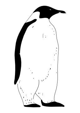 Pingouin. Source : http://data.abuledu.org/URI/50276d04-pingouin
