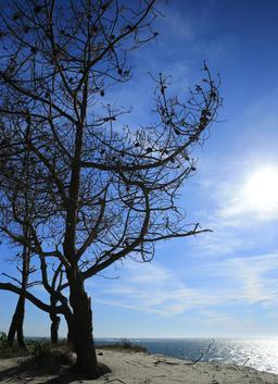 Pins morts sur le littoral au Petit-Nice. Source : http://data.abuledu.org/URI/55bbaea2-pins-morts-sur-le-littoral-au-petit-nice