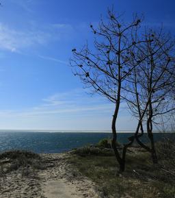 Pins morts sur le littoral au Petit-Nice. Source : http://data.abuledu.org/URI/55bbaff6-pins-morts-sur-le-littoral-au-petit-nice