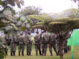 Pisteurs du Parc National des Volcans au Rwanda. Source : http://data.abuledu.org/URI/595bf0b3-pisteurs-du-parc-national-des-volcans-au-rwanda