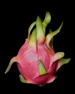 Pitaya. Source : http://data.abuledu.org/URI/54b2c90e-pitaya