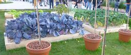 Place Stanislas à Nancy. Source : http://data.abuledu.org/URI/5819d134-place-stanislas-a-nancy