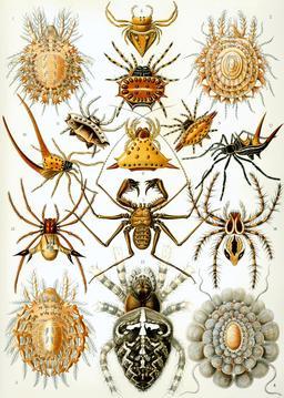 Planche d'arachnides en 1904. Source : http://data.abuledu.org/URI/535cfd59-planche-d-arachnides