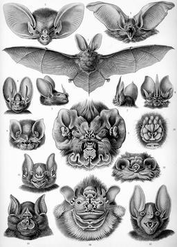 """Résultat de recherche d'images pour """"planches d'animaux"""""""