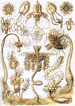 Planche N°6 de biologie marine. Source : http://data.abuledu.org/URI/52cdd839-planche-n-6-de-biologie-marine