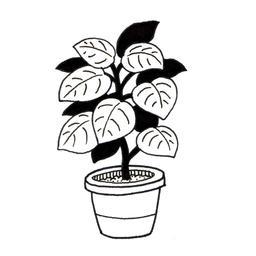 Plante verte d'intérieur. Source : http://data.abuledu.org/URI/52d7d501-plante-verte-d-interieur