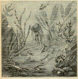 Plantes de la mer. Source : http://data.abuledu.org/URI/524dea3b-plantes-de-la-mer