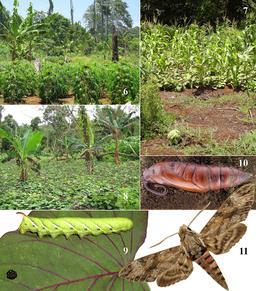 Plantes et papillon de Vanikoro. Source : http://data.abuledu.org/URI/59907600-plantes-et-papillon-de-vanikoro