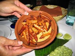 Plat de vers grillés au Mexique. Source : http://data.abuledu.org/URI/522cbf86-plat-de-vers-grilles-au-mexique