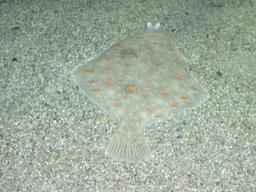 Plie. Source : http://data.abuledu.org/URI/505353ae-plie