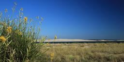 Pointe du Cap-Ferret. Source : http://data.abuledu.org/URI/55bbf600-pointe-du-cap-ferret