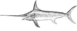 Poisson-scie. Source : http://data.abuledu.org/URI/53eb8b56-poisson-scie