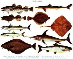 Poissons de mer. Source : http://data.abuledu.org/URI/5200d6be-poissons-de-mer