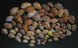 Porcelaines de toutes tailles. Source : http://data.abuledu.org/URI/5148d5ce-porcelaines-de-toutes-tailles