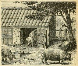 Porcherie dans la Bresse. Source : http://data.abuledu.org/URI/524d8c6b-porcherie-dans-la-bresse