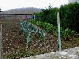 Potager en hiver en Béarn. Source : http://data.abuledu.org/URI/5866cbab-potager-en-hiver-en-bearn