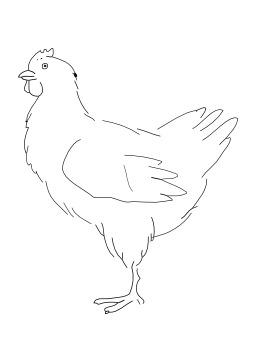 Poule. Source : http://data.abuledu.org/URI/50277912-poule