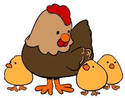 Poule et trois poussins. Source : http://data.abuledu.org/URI/5049bbe9-poule-et-trois-poussins