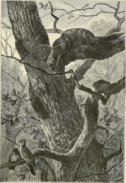 Prédation dans les arbres. Source : http://data.abuledu.org/URI/58b31986-predation-dans-les-arbres