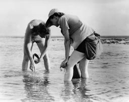 Prélèvements marins par Rachel Carson et Bob Hines en 1952. Source : http://data.abuledu.org/URI/538489bd-prelevements-marins-par-rachel-carson-et-bob-hines-en-1952