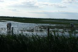 Près de l'étang de Vaccarès. Source : http://data.abuledu.org/URI/56d5ebf6-pres-de-l-etang-de-vaccares