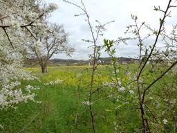 Printemps en bord de Garonne. Source : http://data.abuledu.org/URI/551ebe0f-printemps-en-bord-de-garonne