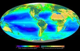 Producteurs primaires terrestres et océaniques. Source : http://data.abuledu.org/URI/50b7e7c5-producteurs-primaires-terrestres-et-oceaniques