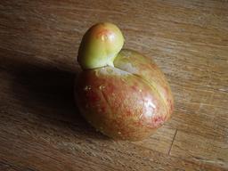 Prune de forme bizarre. Source : http://data.abuledu.org/URI/53aaf8c5-prune-de-forme-bizarre