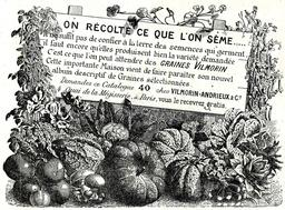 Publicité pour Vilmorin en 1914. Source : http://data.abuledu.org/URI/544e93fa-publicite-pour-vilmorin-en-1914