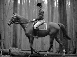 Pur-sang belge et son cavalier. Source : http://data.abuledu.org/URI/53ae8a23-pur-sang-belge-et-son-cavalier