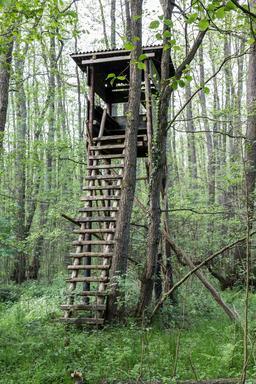 Pylone en bois dans la réserve naturelle de Dülmen. Source : http://data.abuledu.org/URI/568641f4-pylone-en-bois-dans-la-reserve-naturelle-de-dulmen