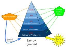 Pyramide écologique. Source : http://data.abuledu.org/URI/588c807f-pyramide-ecologique