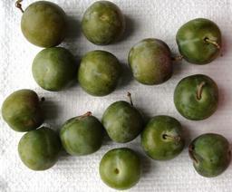 Quatorze prunes. Source : http://data.abuledu.org/URI/53ab1f92-quatorze-prunes