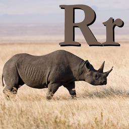 R pour le Rhinocéros. Source : http://data.abuledu.org/URI/53320432-r-pour-le-rhinoceros