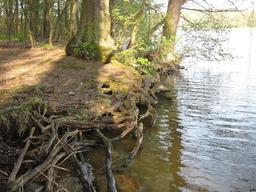 Racines de berges. Source : http://data.abuledu.org/URI/503b6c48-racines-de-berges